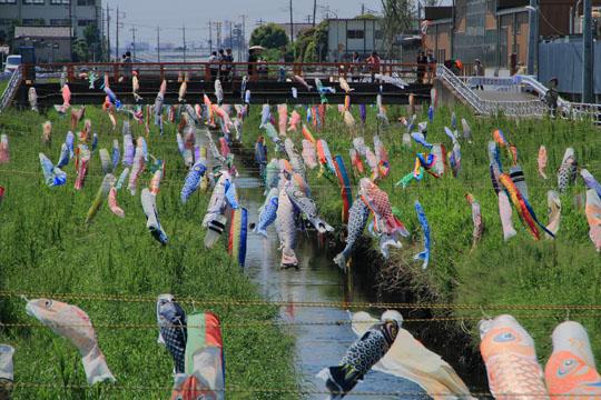 千葉県 市川市の国分川鯉のぼりフェスティバル